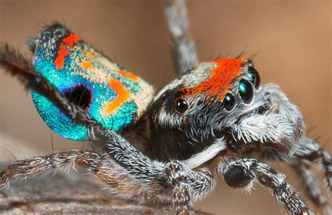 Facts About Spiders - Some Interesting Facts