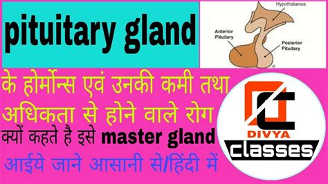 ️ Why pituitary gland is known as master gland