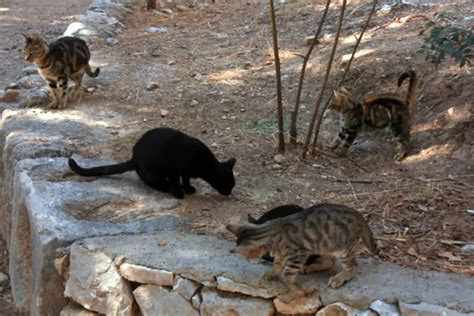 Cats from Athens {Greece} - Traveling Cats - Travel